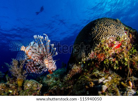 Lion Fish at Tiger Beach