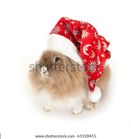 Lion head rabbit in the New Year hat. In the Oriental calendar 2011 - the year of rabbit.