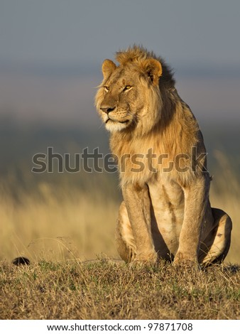 Lion in Africa - Masai Mara - stock photo
