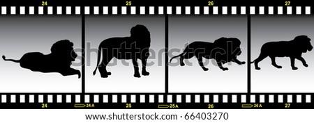lion in frames of film illustration - stock photo