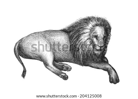 Lion isolated on white background. Black and white illustration. Hand drawn sketch