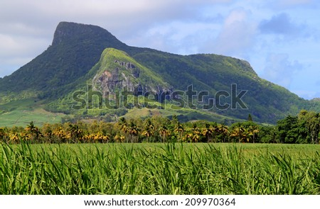 Lion mountain with green sugar cane field foreground on the beautiful tropical paradise island, Mauritius - stock photo