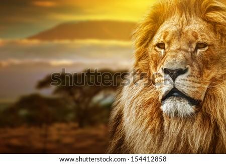 Lion portrait on savanna landscape background and Mount Kilimanjaro at sunset - stock photo