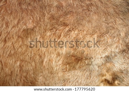 lion real textured fur on an animal from the zoo - stock photo