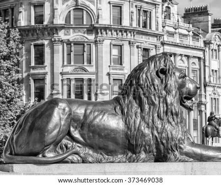Lion statue of Trafalgar Square, London. - stock photo