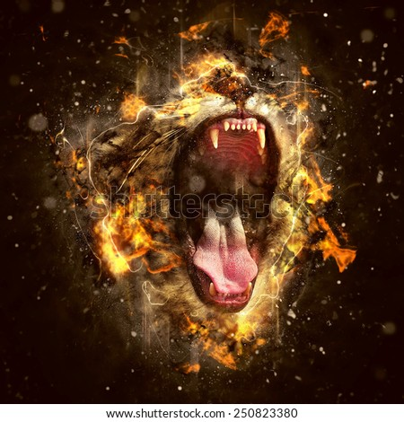 Lion, the King of beasts and the most dangerous animal of the world. - stock photo