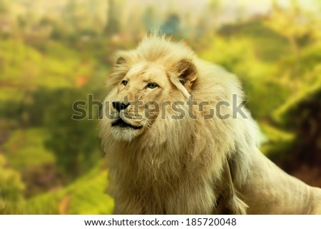 lion with country background - stock photo