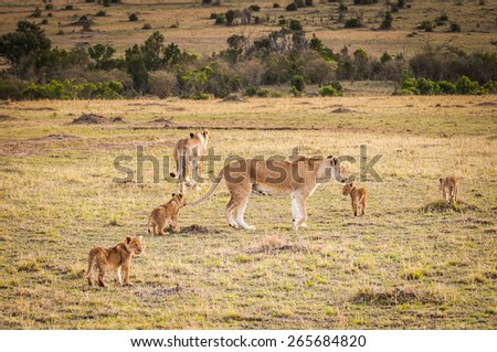 Lioness and her little lion cubs in Kenya