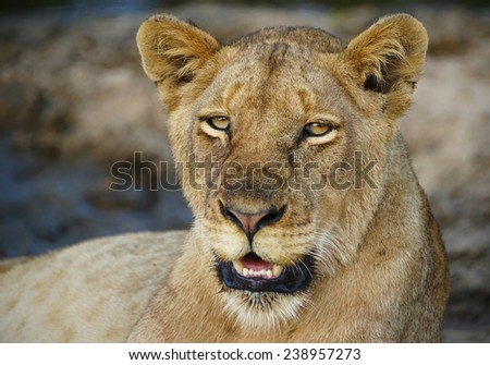 Lioness next to river