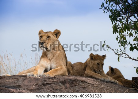 Lioness on the rock in Masai Mara national Park Kenya