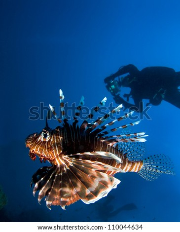 Lionfish and divers - stock photo
