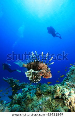 Lionfish and Scuba Divers - stock photo