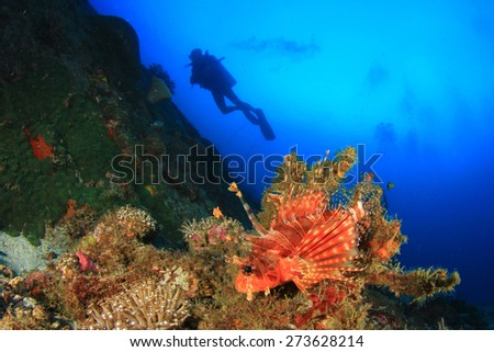 Lionfish, coral reef and scuba diver - stock photo