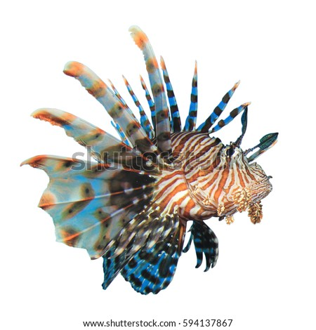 Lionfish Stock Images, Royalty-Free Images & Vectors | Shutterstock