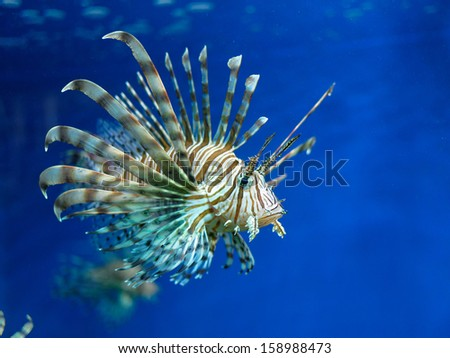 Lionfish in an aquarium, Crimea