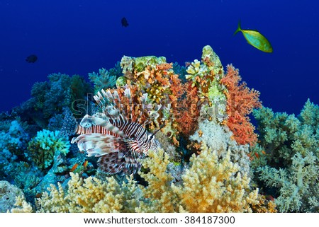 Lionfish (Pterios miles) on the coral reef in the Red Sea, Egypt. - stock photo
