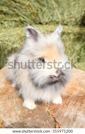 Lionhead rabbit sitting on a log against hay background - stock photo