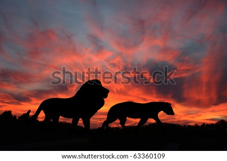 Lions in the Sunset on the Serengeti