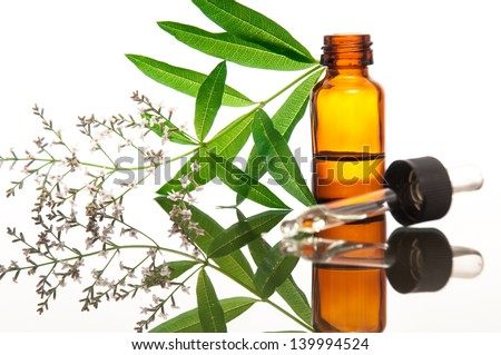 Lippa citrodora ( lemon vervain ,  verbena ) with essential oil _ naturopathy - stock photo