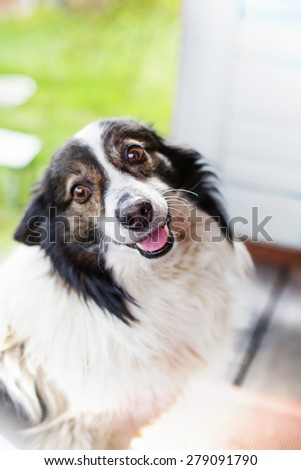 Listening dog against bright summer background - stock photo