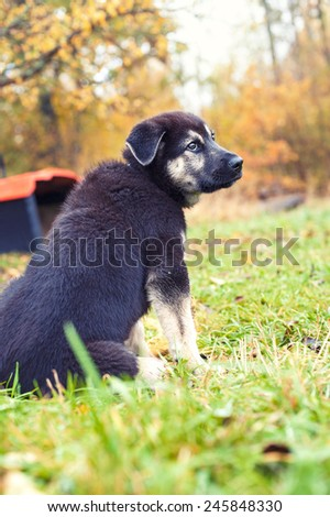 Little abandoned sad puppy sitting on chain looking upward. Autumn time outdoors. - stock photo