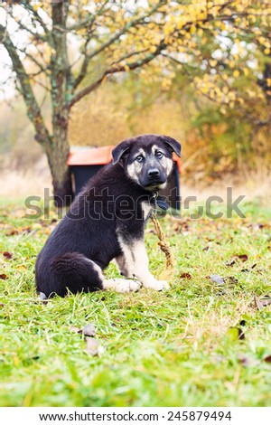 Little abandoned sad puppy sitting on chain looking upward. Autumntime outdoors. - stock photo