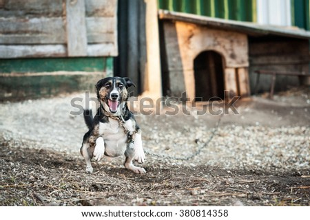 Little angry dog on a chain protecting a house - stock photo