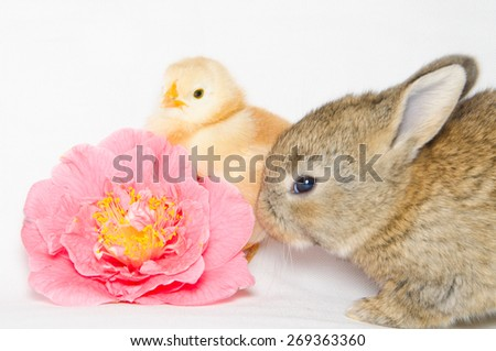 Little animals near pink camellia flower isolated on white background. - stock photo