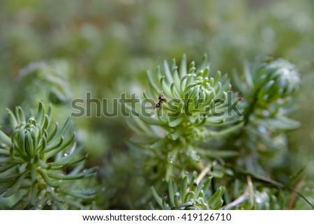 little ant in garden macro photography - stock photo