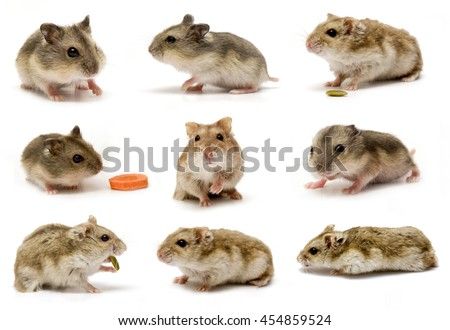 Little baby hamsters eating carrot, cabbage and cheese - stock photo