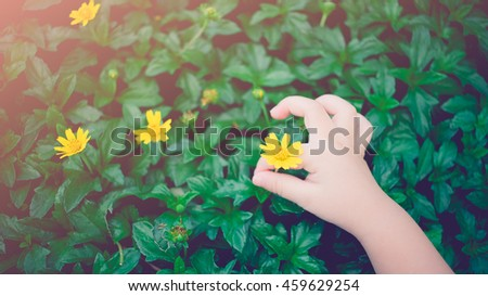 Little baby hand picking yellow flowers.still life and sunset light effect. - stock photo