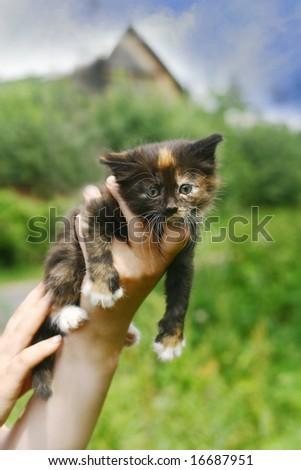 little baby kitten in hands - stock photo