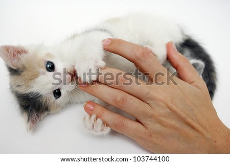 little baby kitten played - stock photo