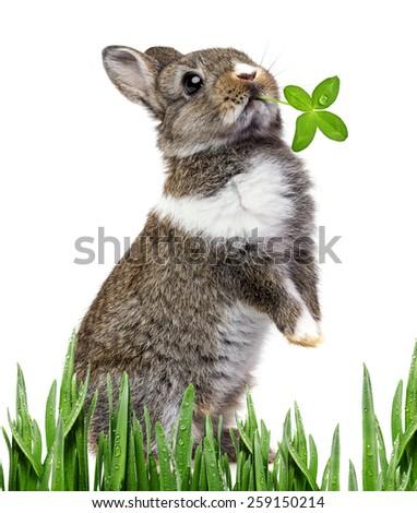 little baby rabbit - stock photo