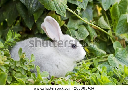 Little baby white rabbit in green grass
