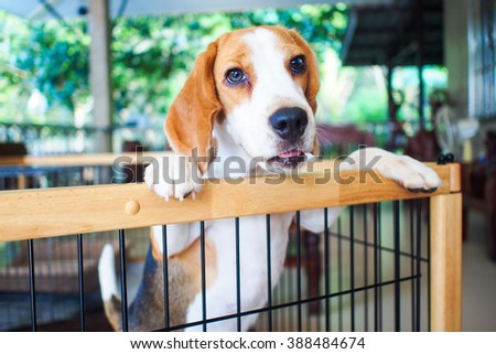 Little beagle dog standing on the cave - stock photo
