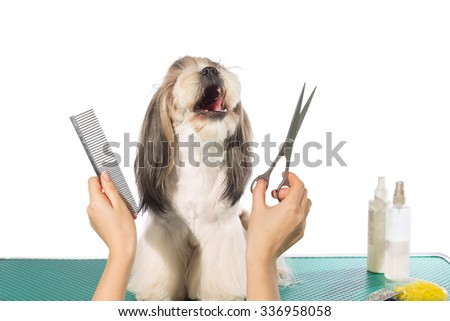 how to cut shih tzu hair with scissors