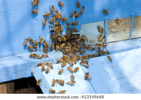 Little Bees at blue beehive - stock photo