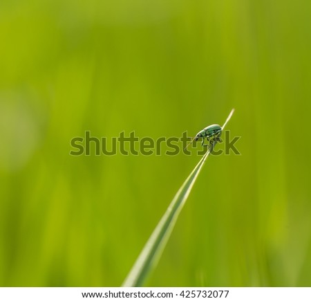 Little beetle sitting on plant. Nature photo with insect
