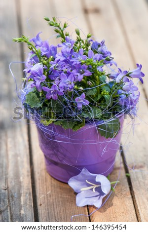 Little bell flower in purple flower pot