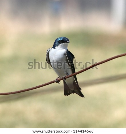 Little bird perched on a wire in the sun. - stock photo