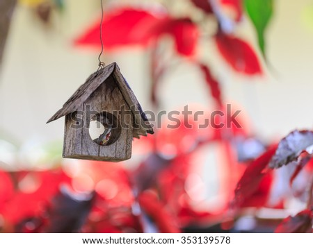 little bird wood home in nature - stock photo