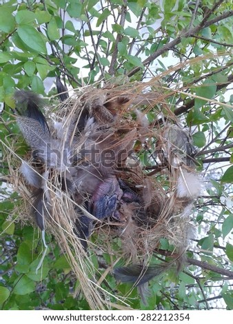 little birds in a nest on the tree - stock photo