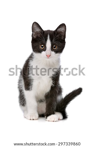 little black and white kitten in front of a white background