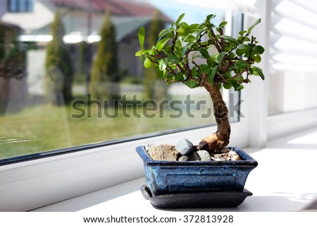 Little bonsai tree on the window  - stock photo