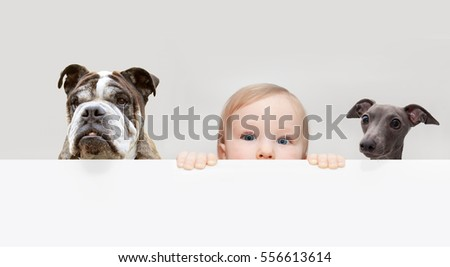 little boy and dogs peeping out from hiding