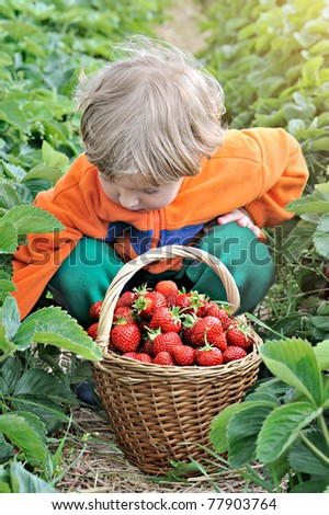 Little boy at the strawberry plantation picking berries - stock photo