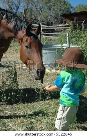 Little boy feeding horse - stock photo