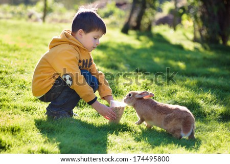 Little boy feeding rabbit in farm - stock photo