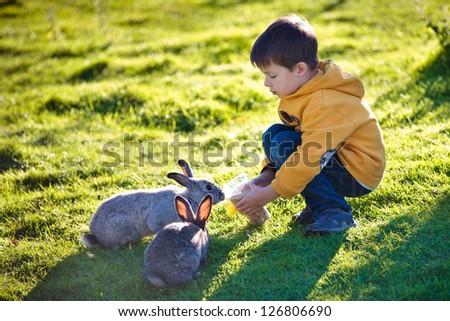 Little boy feeding two rabbits in farm - stock photo